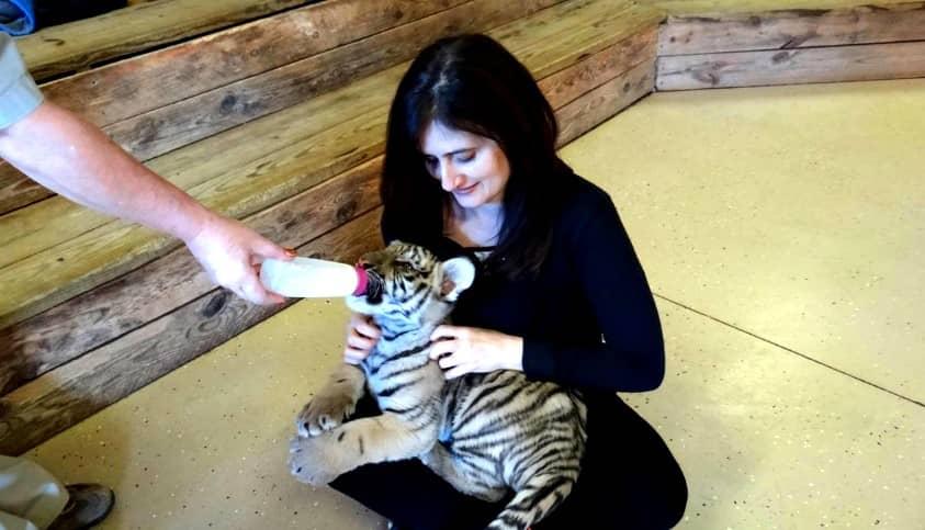 Kristen Allred feeding baby tiger