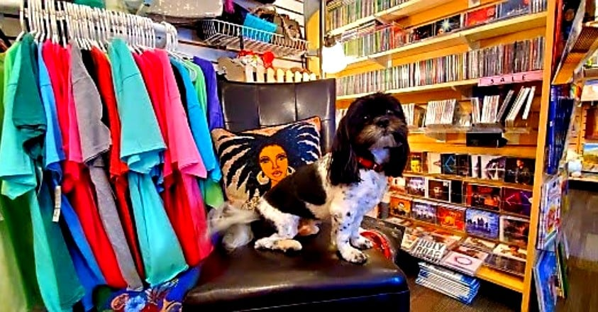 Truth Bookstore dog
