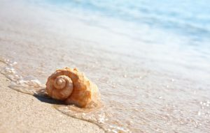 Best Shelling Beaches In NC