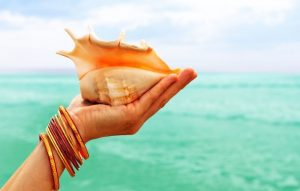 Guide to identifying different types of sea shells